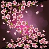Ανασκόπηση με το sakura - ιαπωνικό δέντρο κερασιών ελεύθερη απεικόνιση δικαιώματος