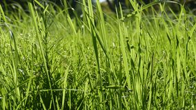 Ανασκόπηση μιας πράσινης χλόης πράσινη σύσταση χλόης Στοκ φωτογραφία με δικαίωμα ελεύθερης χρήσης