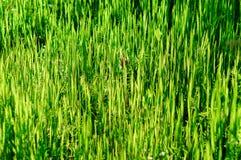 Ανασκόπηση μιας πράσινης χλόης Στοκ Εικόνες