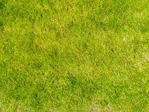 Ανασκόπηση μιας πράσινης χλόης πράσινη σύσταση χλόης Στοκ Εικόνες