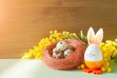 ανασκόπηση Πάσχα εορταστικό Λαγουδάκι και αυγά Πάσχας στη φωλιά κοντά στα λουλούδια mimosa Στοκ φωτογραφίες με δικαίωμα ελεύθερης χρήσης