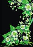 ανασκόπηση περιλήψεων floral διανυσματική απεικόνιση