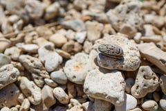 Ανασκόπηση πετρών θάλασσας Γκρίζο υπόβαθρο πετρών - σύσταση πετρών χαλικιών Στοκ Εικόνες
