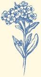 ανασκόπηση που σύρει το floral διάνυσμα χλόης Κλαδάκι Forget-me-not Στοκ Φωτογραφίες
