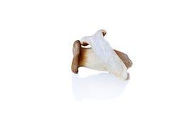 ανασκόπηση που σύρει ψηφιακά το λευκό μανιταριών Στοκ φωτογραφία με δικαίωμα ελεύθερης χρήσης