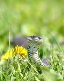ανασκόπηση πράσινη πέρα από το φίδι Στοκ εικόνες με δικαίωμα ελεύθερης χρήσης