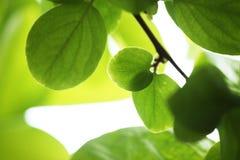 ανασκόπηση πράσινη στοκ φωτογραφίες