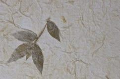 Ανασκόπηση σύστασης εγγράφου μουριών με το φύλλο Στοκ Εικόνα