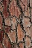 Ανασκόπηση σύστασης φλοιών πεύκο-δέντρων Στοκ Εικόνες