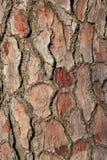 Ανασκόπηση σύστασης φλοιών πεύκο-δέντρων Στοκ φωτογραφίες με δικαίωμα ελεύθερης χρήσης
