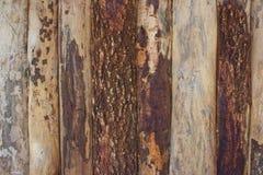 Ανασκόπηση του φυσικού δάσους Στοκ Φωτογραφία