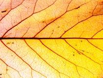 Ανασκόπηση του φύλλου φθινοπώρου Στοκ Φωτογραφίες