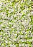 Ανασκόπηση των άσπρων λουλουδιών Στοκ εικόνα με δικαίωμα ελεύθερης χρήσης