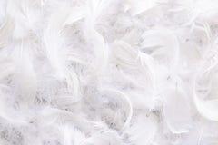 Ανασκόπηση των άσπρων φτερών Στοκ φωτογραφία με δικαίωμα ελεύθερης χρήσης