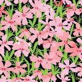 Ανασκόπηση των ρόδινων λουλουδιών Στοκ εικόνα με δικαίωμα ελεύθερης χρήσης