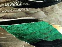 Ανασκόπηση των φτερών μιας πάπιας Στοκ φωτογραφία με δικαίωμα ελεύθερης χρήσης