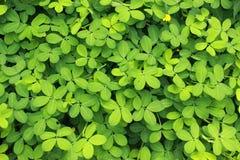Ανασκόπηση των φυτών Στοκ εικόνες με δικαίωμα ελεύθερης χρήσης