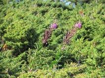 Ανασκόπηση των φυτών Στοκ εικόνα με δικαίωμα ελεύθερης χρήσης