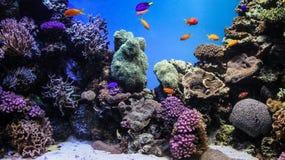 ανασκόπηση υποβρύχια Στοκ εικόνα με δικαίωμα ελεύθερης χρήσης