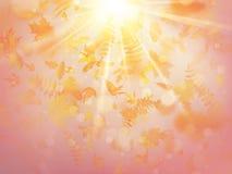 Ανασκόπηση φθινοπώρου με τα φύλλα πίσω σχολικό πρότυπο 10 eps διανυσματική απεικόνιση