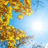 Ανασκόπηση φθινοπώρου με τα φύλλα σφενδάμου Στοκ φωτογραφία με δικαίωμα ελεύθερης χρήσης