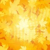Ανασκόπηση φθινοπώρου με τα φύλλα Στοκ Εικόνες