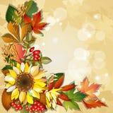 Ανασκόπηση φθινοπώρου με τον ηλίανθο Στοκ Εικόνες