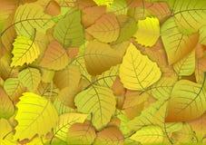 Ανασκόπηση φθινοπώρου των κίτρινων φύλλων Στοκ Εικόνες