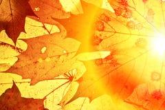 Ανασκόπηση φθινοπώρου. Στοκ εικόνα με δικαίωμα ελεύθερης χρήσης