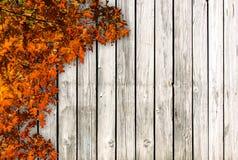 Ανασκόπηση φθινοπώρου Στοκ Φωτογραφίες