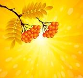 Ανασκόπηση φθινοπώρου Ελεύθερη απεικόνιση δικαιώματος