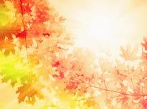 Ανασκόπηση φθινοπώρου Στοκ εικόνα με δικαίωμα ελεύθερης χρήσης
