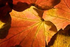 ανασκόπηση φθινοπώρου Στοκ φωτογραφία με δικαίωμα ελεύθερης χρήσης