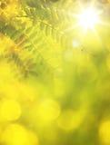 ανασκόπηση φθινοπώρου jpg Στοκ Φωτογραφία