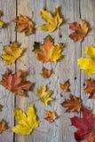 Ανασκόπηση φύλλων φθινοπώρου το φθινόπωρο ζωηρόχρωμο βγάζει φύλλα Στοκ Φωτογραφία