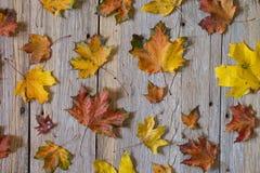 Ανασκόπηση φύλλων φθινοπώρου το φθινόπωρο ζωηρόχρωμο βγάζει φύλλα Στοκ εικόνες με δικαίωμα ελεύθερης χρήσης