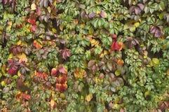 Ανασκόπηση φύλλων φθινοπώρου Στοκ Φωτογραφίες