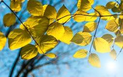 Ανασκόπηση φύλλων φθινοπώρου Στοκ φωτογραφίες με δικαίωμα ελεύθερης χρήσης