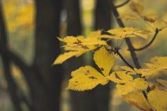 Ανασκόπηση φύλλων φθινοπώρου Στοκ Φωτογραφία
