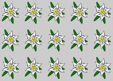 ανασκόπηση edelweiss διανυσματική απεικόνιση