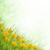 ανασκόπηση 02 floral Στοκ Εικόνα