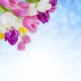 ανασκόπηση 03 floral Στοκ Φωτογραφία