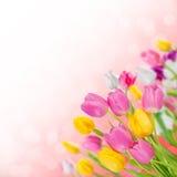ανασκόπηση 07 floral Στοκ Εικόνες