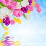 ανασκόπηση 09 floral Στοκ Εικόνα