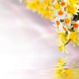 ανασκόπηση 15 floral Στοκ Εικόνες