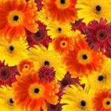 ανασκόπηση floral Στοκ φωτογραφία με δικαίωμα ελεύθερης χρήσης
