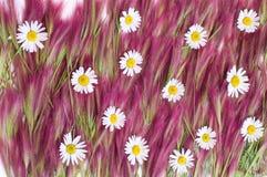 ανασκόπηση floral Στοκ Φωτογραφίες
