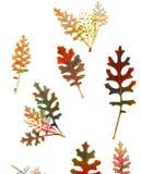 Ανασκόπηση Grunge με τα φύλλα φθινοπώρου Απεικόνιση αποθεμάτων