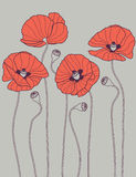 ανασκόπηση poppyes Στοκ Φωτογραφία