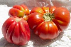 Αναστατωμένες ντομάτες οικογενειακών κειμηλίων Στοκ εικόνα με δικαίωμα ελεύθερης χρήσης